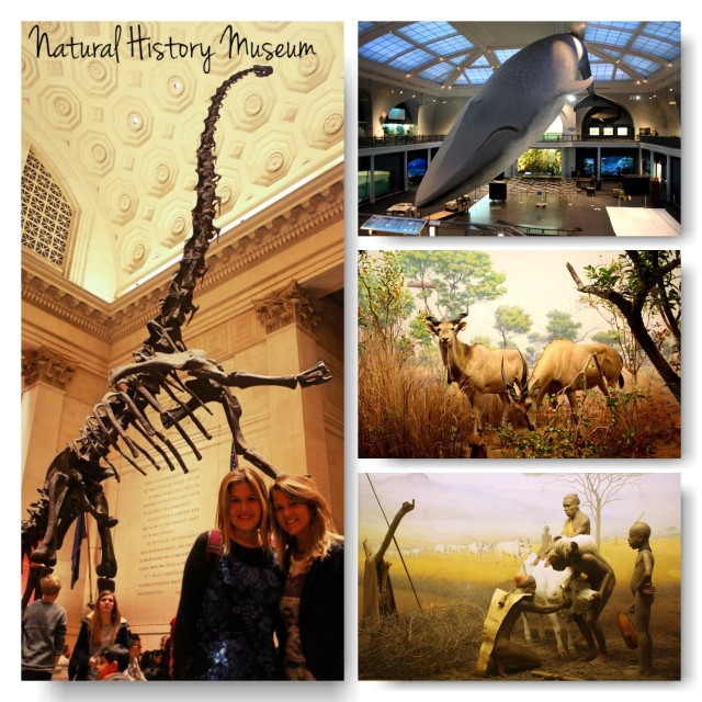sts-natural history museum
